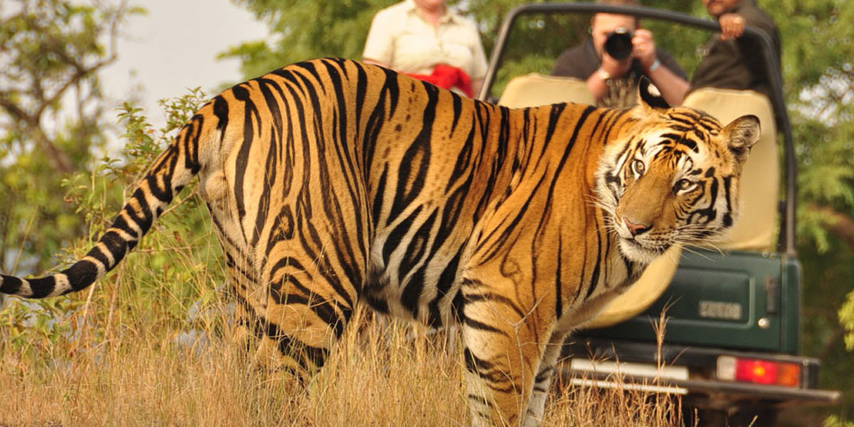 Sariska Tiger Reserve - Ranthambhore National Park